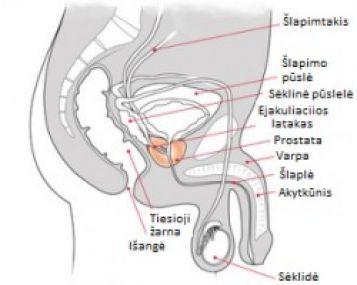 Prezervatyvo varpos dydis